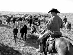 120309_Cattle_Drive (640x480)